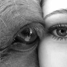 """""""How Equine Therapy is Helping Couples"""". equine therapy is reaching more and more demographics Pretty Horses, Horse Love, Beautiful Horses, Animals Beautiful, Beautiful Eyes, Pretty Eyes, Equine Photography, Animal Photography, White Photography"""