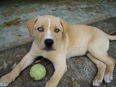 Estas razas de perros se cruzaron y el resultado es adorable [FOTOS] | ActitudFEM