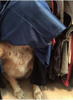I was looking all over for her... there she was..in the closet....HIDING!! http://ift.tt/2q4XURY