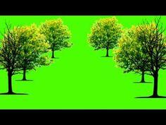 Free Green Screen Backgrounds, Green Screen Images, Green Screen Background Images, Green Background Video, Smoke Background, Bridge Wallpaper, Green Screen Footage, Cute Girl Hd Wallpaper, Black Background Photography