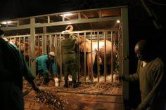 Vor dem Transport der Elefantenwaisen gab es noch eine kleine Stärkung.  Bild: (c)DSWT