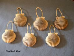NANTUCKET SCALLOP SHELL Ornaments  Set of 6 by MaidenNantucket, $12.00