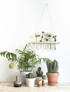 Love this plant display. Plants bring life and warmth into a room. Try a few different ideas with your favourite plants.