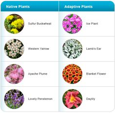 idaho xeriscape, Here are some natives and adaptive plants that work well in Boise.
