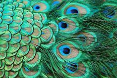 turkuazın en guzel tonu ile ilgili görsel sonucu