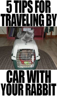 5 Tips For Traveling By Car With Your Rabbit