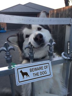 """Beware of the dog"""