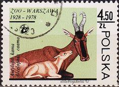 Poland.  ANIMALS.  Hartebeests. Scott 2306 A711.  Issued 1978 Nov 10, 4.50. /ldb.