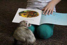 Un peu d'aide en lecture pour cette petite fille dyslexique! Voyelle, notre furet adore qu'on lui raconte des histoires de princesses!