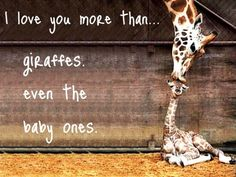 ok, that's probably a lie. i probably don't love you more than baby giraffes. i mean...look at it...