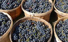 Meritage  | Wine Varietals | Gold Medal Wine Club