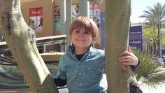 In the tree in Phoenix