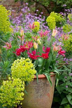 Tulip Collection - and the euphorbia surrounding it is pretty nice too.