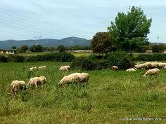 Año 2015: La Dehesa en los Alrededores del Yacimiento Dog Food Recipes, Madrid, Pets