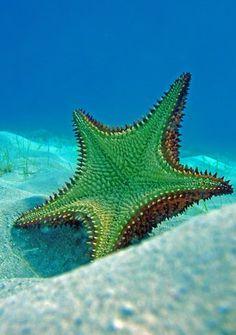Starfish are such AMAZING creatures!!!