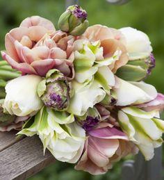 Tulip 'La Belle Epoque'