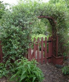 Primitive Inspired Gardens:  Not only will climbing vines soften a hard edge, they will also bring your attention to a point of interest in your landscape, such as a garden arbor, trellis, pergola or garden shed.