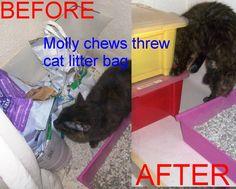 yes you guested Molly the sas kitten Vs cat liter bag http://sasmolly.blogspot.co.uk/?spref=fb