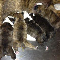 Pups we delivered at work