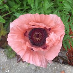 I believe nature provides the color palette for everything else in the world. When I look at this magnificent Oriental Poppy from our garden its' color is reflected in the vintage Sarah Coventry brooch/pendant just listed today in TheGalvanicFlea.
