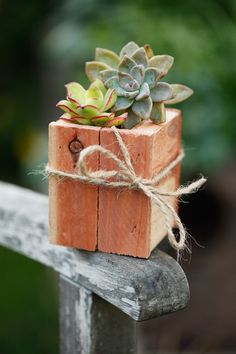 tiny succulent in wood planter. Sweet. Makes me think to bring in a few tiny hens+chicks for the winter. Hmmm...could drill a hole in a nice slice of a dead branch, for a planter... This would be a cute party favor or wedding place-marker.