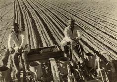Planting cotton, 1930s. Max Penson - Russian Photography - Nailya Alexander Gallery