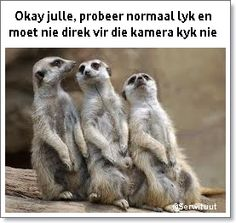 241 best south africa humour images on pinterest news south fotosessies afrikaans quotesextended familyfunny altavistaventures Images