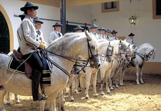 The Royal Andalusian School of Equestrian Art Foundation. / La Fundación Real Escuela Andaluza del Arte Ecuestre.