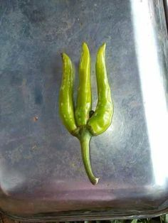 Weapon of lord shiva in form of chilli