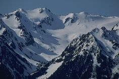 This is Mount Olympus, the tallest mountain in the Olympic mountain range.  It's only 7,980 feet tall, but we're still proud of it.  Besides being the hunting ground of the Cullen clan, it is well known for its large glaciers.