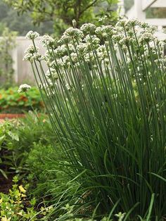 Easy herbs to grow from seed | Living the Country Life