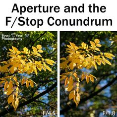 Aperture and the F/Stop Conundrum - an introduction to aperture | Boost Your Photography