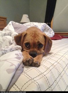 These Puggle eyes will just melt your heart!