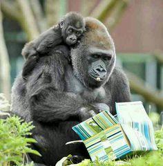 Gorila and baby