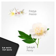Nº 66 Kadın Parfümü #usocosmetics, #kadınparfümü, #perfume, #parfüm, #parfum