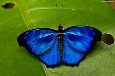 Beautiful Blue Butterly by Marlos Menezes