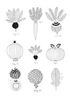 Vegetables. Botanic print. By Ryn Frank www.rynfrank.co.uk: