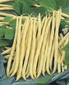 Pole beans, French Gold