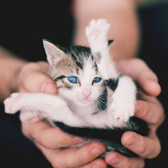 a gymnast kitten!