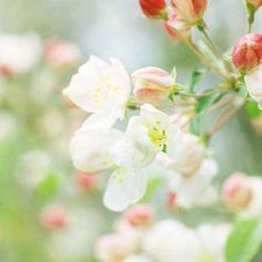 Blossom dreamy flower photography  country chic by joystclaire, $15.00