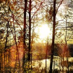 Morning sun Norway by Kjersti.