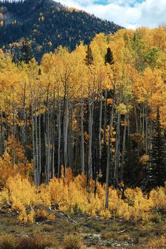 Durango, Colorado Kerry and Patti, this is what this beautiful photo reminds me of. Just beautiful!  Cant wait to go to D, Co.