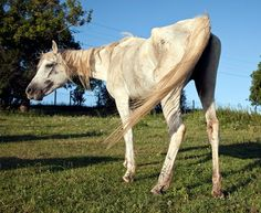 Underweight Horses: Surveillance, Management Considerations