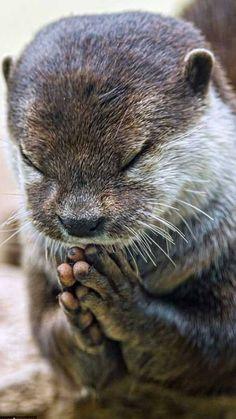 Very cute. Looks like he's praying (mkc via Chikako Asai).
