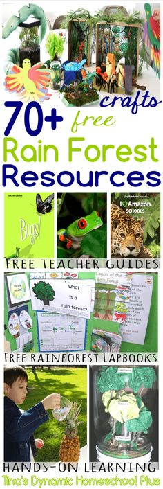 70 Free Rain Forest Resources Teacher Guides Crafts Lapbooks Tinas Dynamic Homeschool Plus Rainforest Classroom, Rainforest Activities, Rainforest Project, Rainforest Theme, Rainforest Animals, Science Activities, Biome Project, Rainforest Crafts, Amazon Rainforest