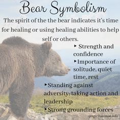 Bear Spirit Animal In the kingdom of spirit animals, the bear is emblematic of grounding forces and strength. Spirit Animal Tattoo, Bear Spirit Animal, Spirit Bear, Animal Spirit Guides, Whats Your Spirit Animal, Animal Reiki, Spiritual Animal, Animal Meanings, Animal Symbolism
