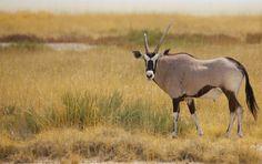 #Etosha in #Namibia ganz individuell