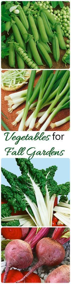 Summer is coming to an end but there are lots of vegetables that you can grow…
