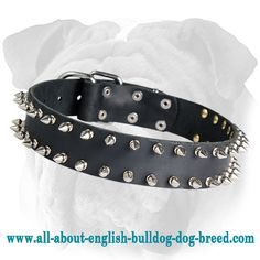 Double Row #Spiked #Leather #Dog #Collar for #English #Bulldog $29.90