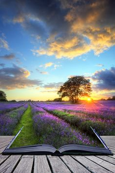 creative concept image of beautiful image of stunning sunset with atmospheric clouds and sky over vibrant ripe lavender fields in english countryside landscape White Magic Spells, Countryside Landscape, Powerful Love Spells, Sunset Images, Beach Wallpaper, Magic Book, Lavender Fields, English Countryside, Beautiful Images